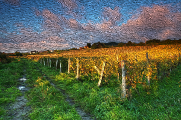 Beautiful Vineyard Landscape with road Depicted in Oil