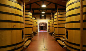 Wine Barrels Foudre