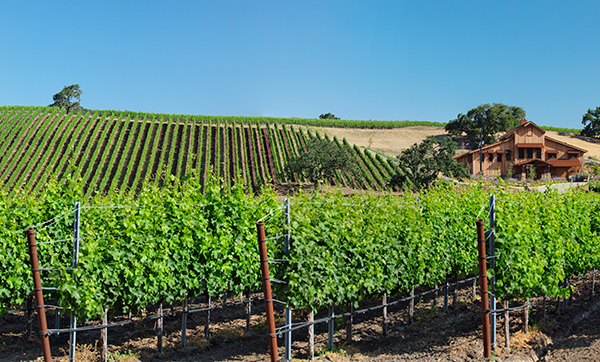 Grassini Family Vineyard in Happy Canyon courtesy of Grassini Family