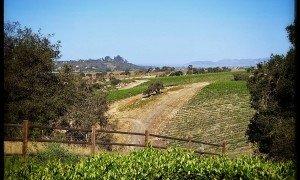 Laetitia Central Coast Wine Country