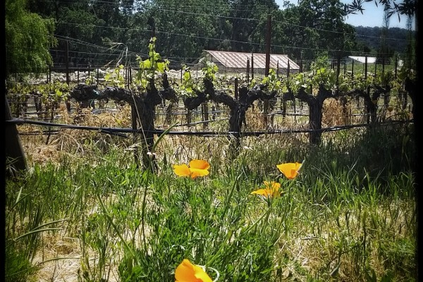 Central Coast Wine Country Spring at Tablas Creek