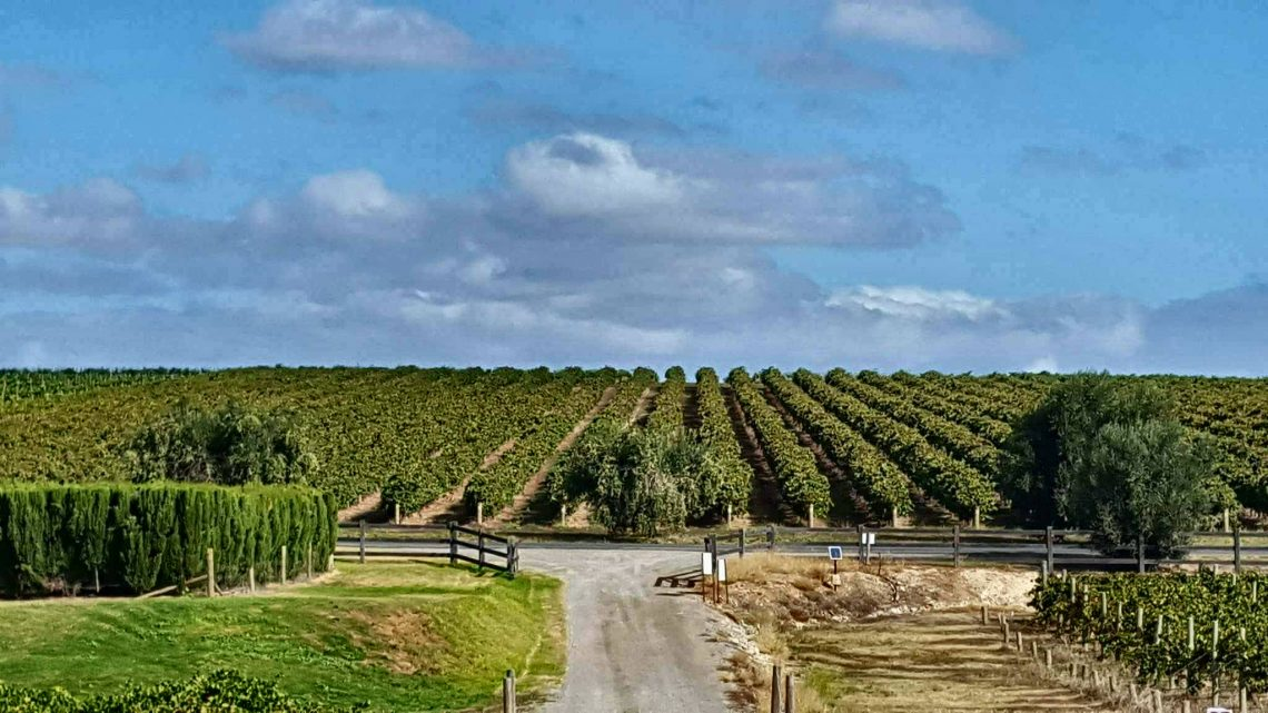 The view at Maxwell Vineyards McLaren Vale Australia