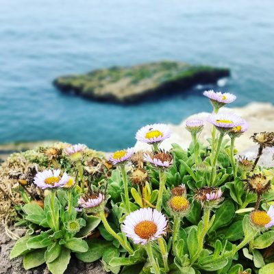 Flowers overlooking the sea