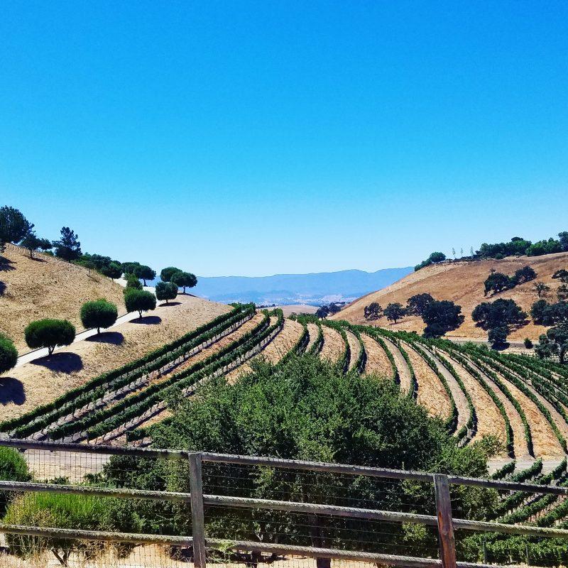 Saarloos & Sons Windmill Ranch Vineyard Ballard Canyon Santa Barbara County