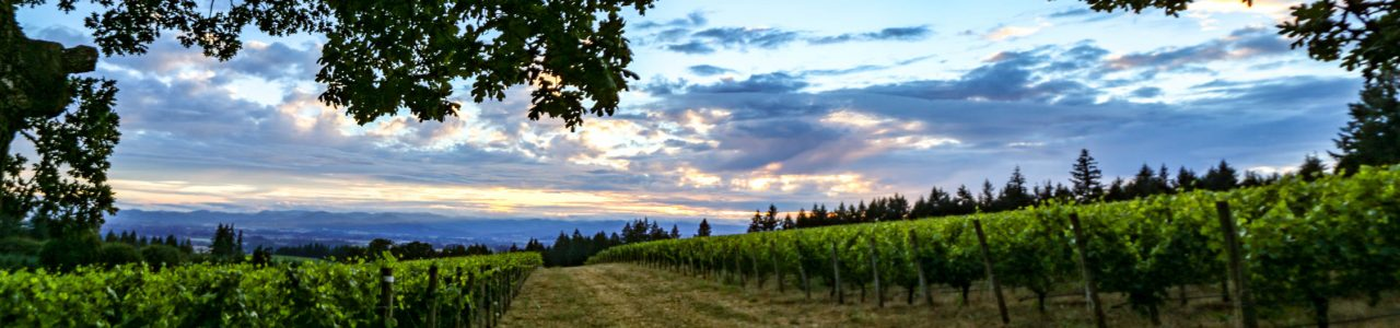 Vista Hills Vineyard in the Dundee Hills AVA