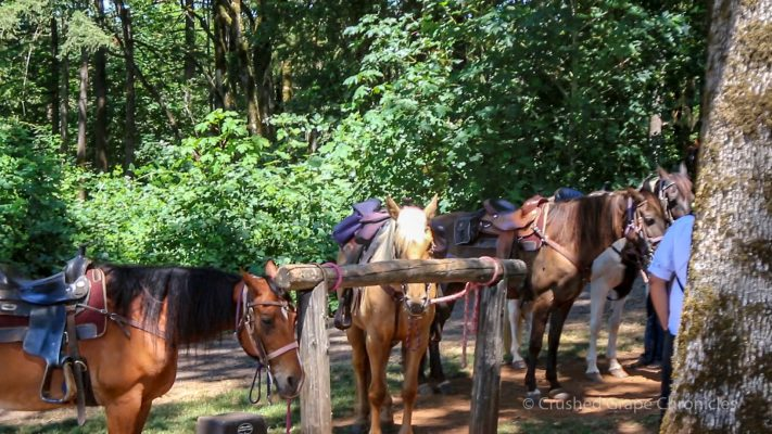 Equestrian Wine Tours Oregon