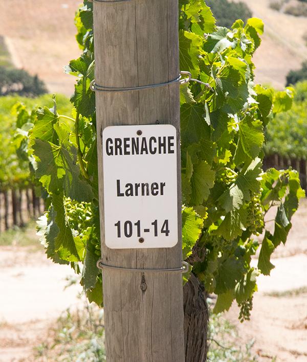 Larner Vineyard Wines