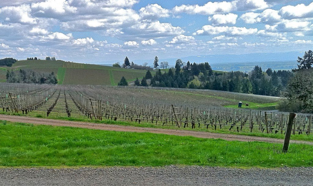 The view from Stoller Winery Dundee HIlls Oregon 2011