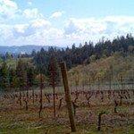 Lange Vineyard Oregon 2011