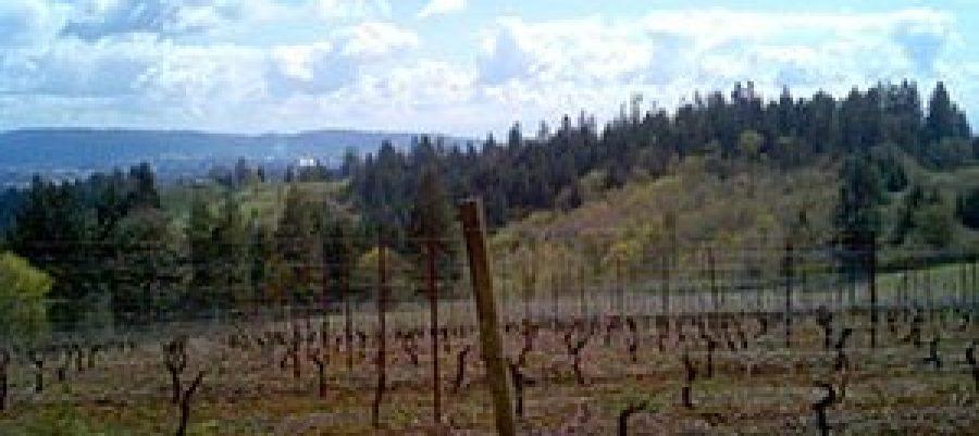 Vineyard view Lange Estate 2011