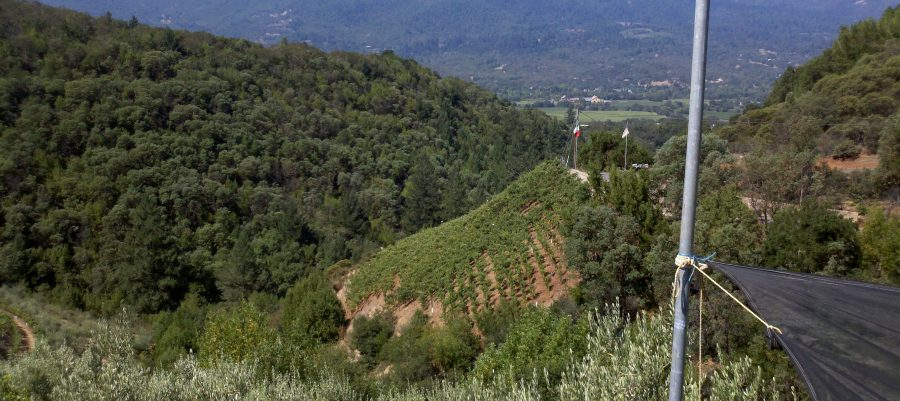 This weekend's wine…Poggio all a Pietra