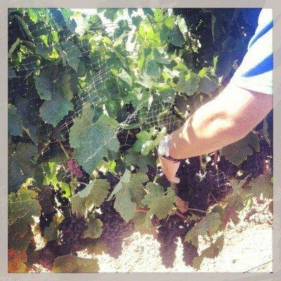 Vines at Carhartt
