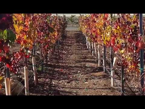 Crushedgrapechronicles To explore and chronicle the grape, it's many stories and it's journey from dirt to glass.