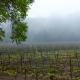 Santa Maria Valley, Santa Barbara County's 1st AVA