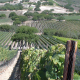 Sta. Rita Hills, the Burgundy of Santa Barbara