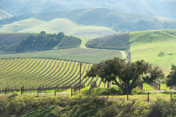 Paso Robles vineyard in the Central Coast Wine Country