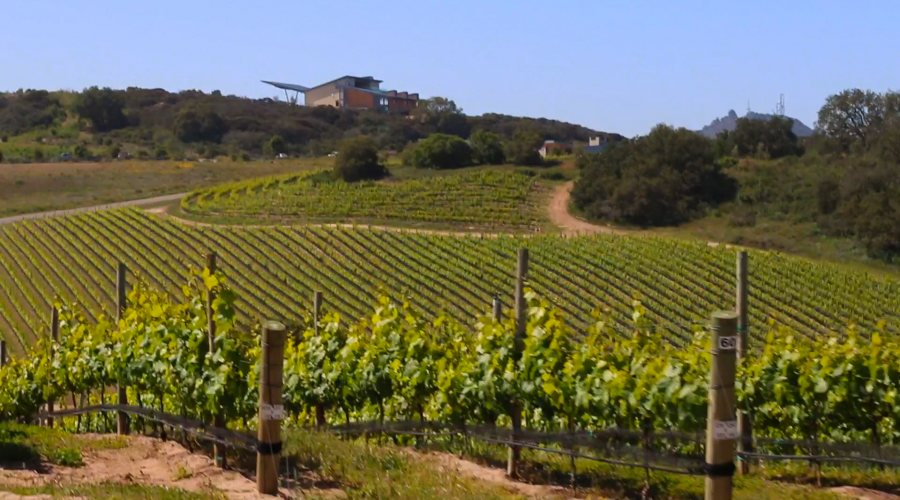 Presqu'ile WInery Hilltop, Santa Maria Valley