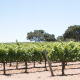 From Dirt to Glass -The Vision, the future of Larner Vineyard & Winery
