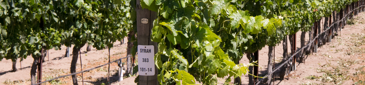 Larner Vineyard Syrah