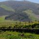 A Sampling of the Incredible Wine Makers of Santa Barbara