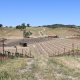 Tablas Creek Vineyard, Paso Robles, Biodynamics and more