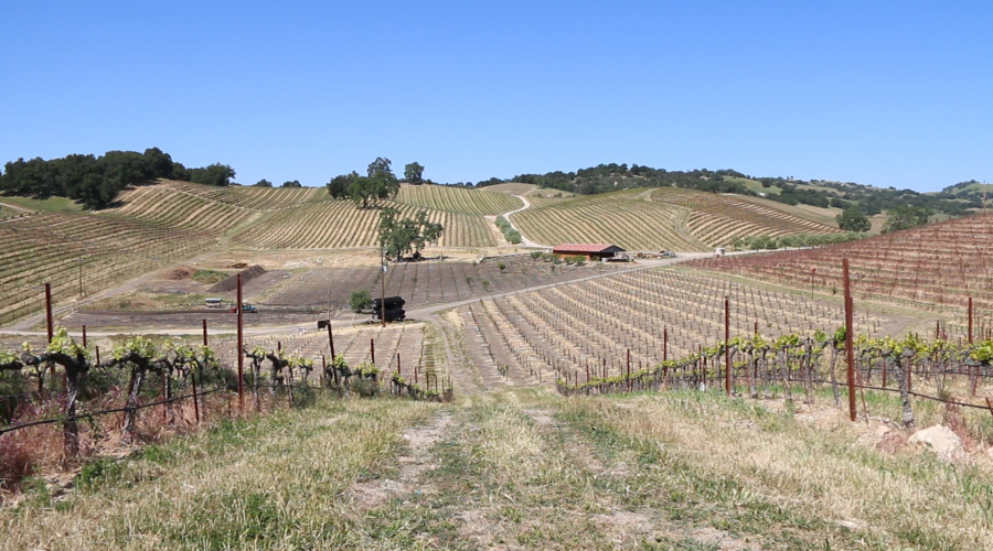 Tablas Creek Vineyard Spring 2015