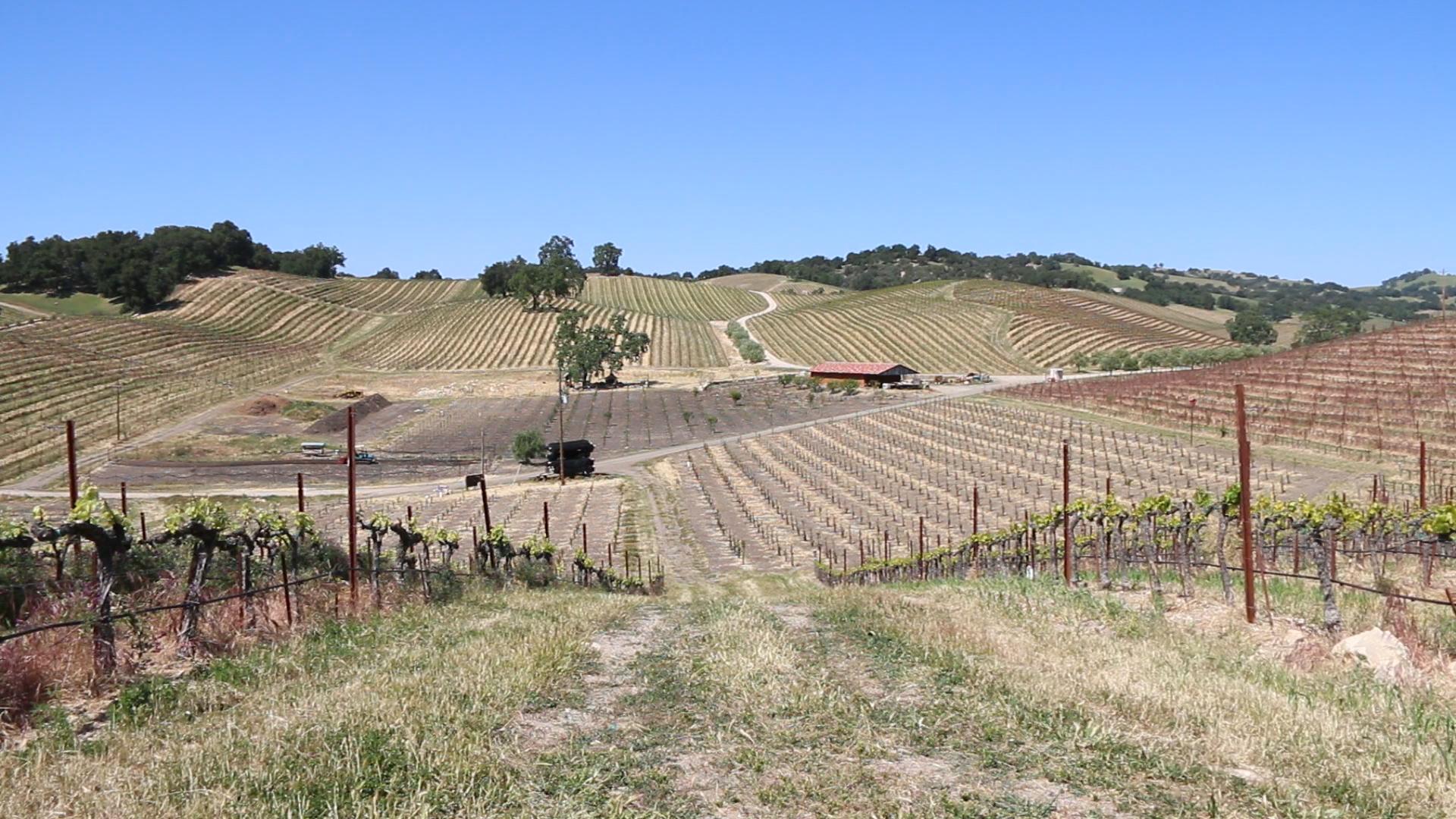 Tablas Creek Vineyard Spring 2015