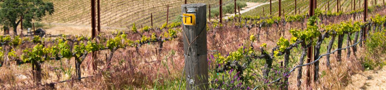 Tablas Creek Vineyards, Paso Robles, Central Coast Wine Country