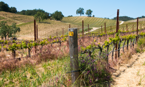Tablas Creek Vineyards, Paso Robles, Central Coast Wine Country