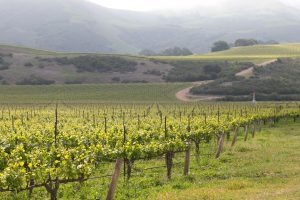 Flash tour Central Coast Wine Country and Beyond – Day 1