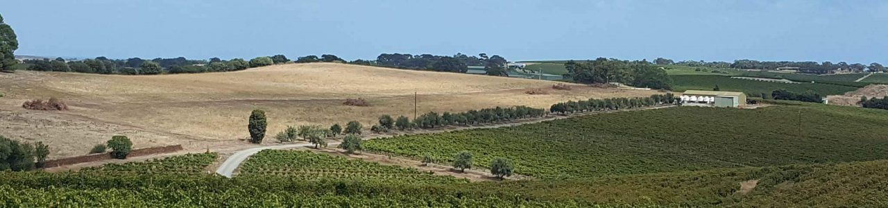 Vineyards in McLaren Vale Australia