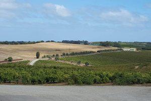 Vineyards in McLaren Vale Australia