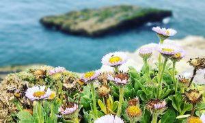 Flowers overlooking the sea