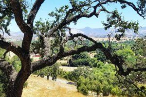 Coast Oak Foxen Canyon road San Rafael Mountains Santa Barbara County