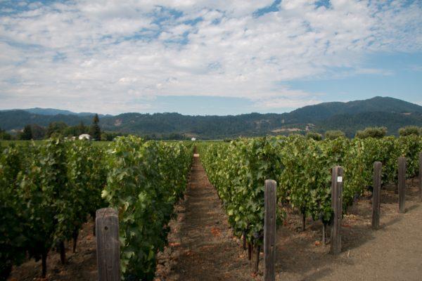 Opus 1, Napa Valley, CA