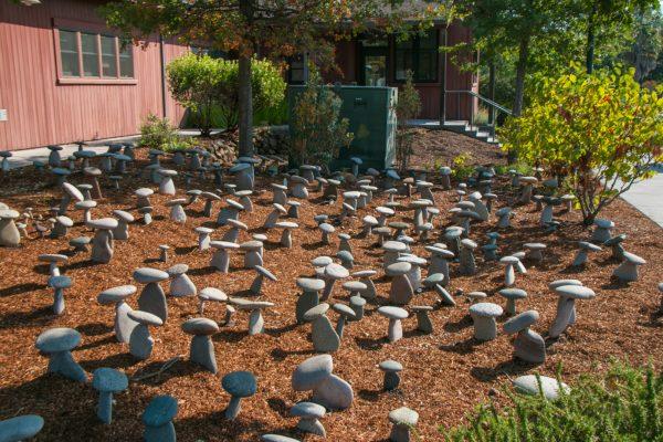 Yountville CA Mushroom Garden