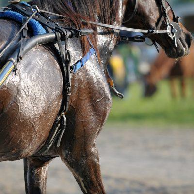 horse sweat