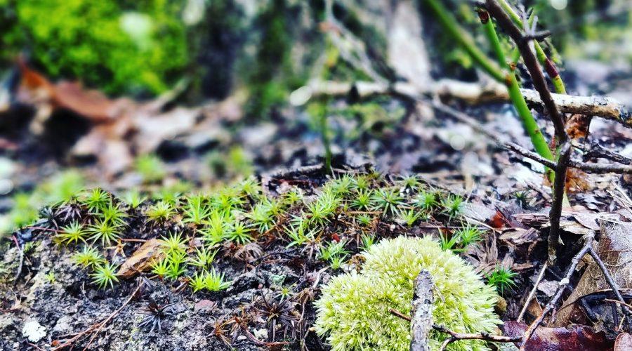 Wet West Virginia moss