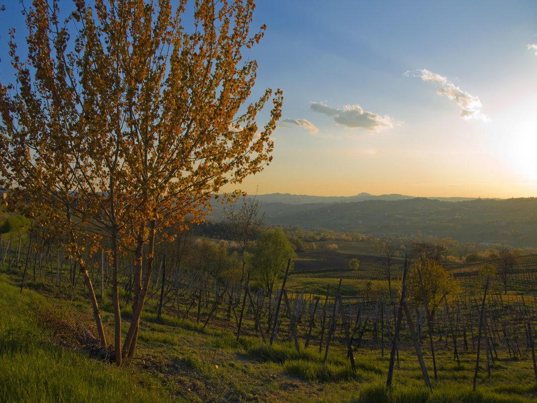 spring-sunset-in-the-vineyard