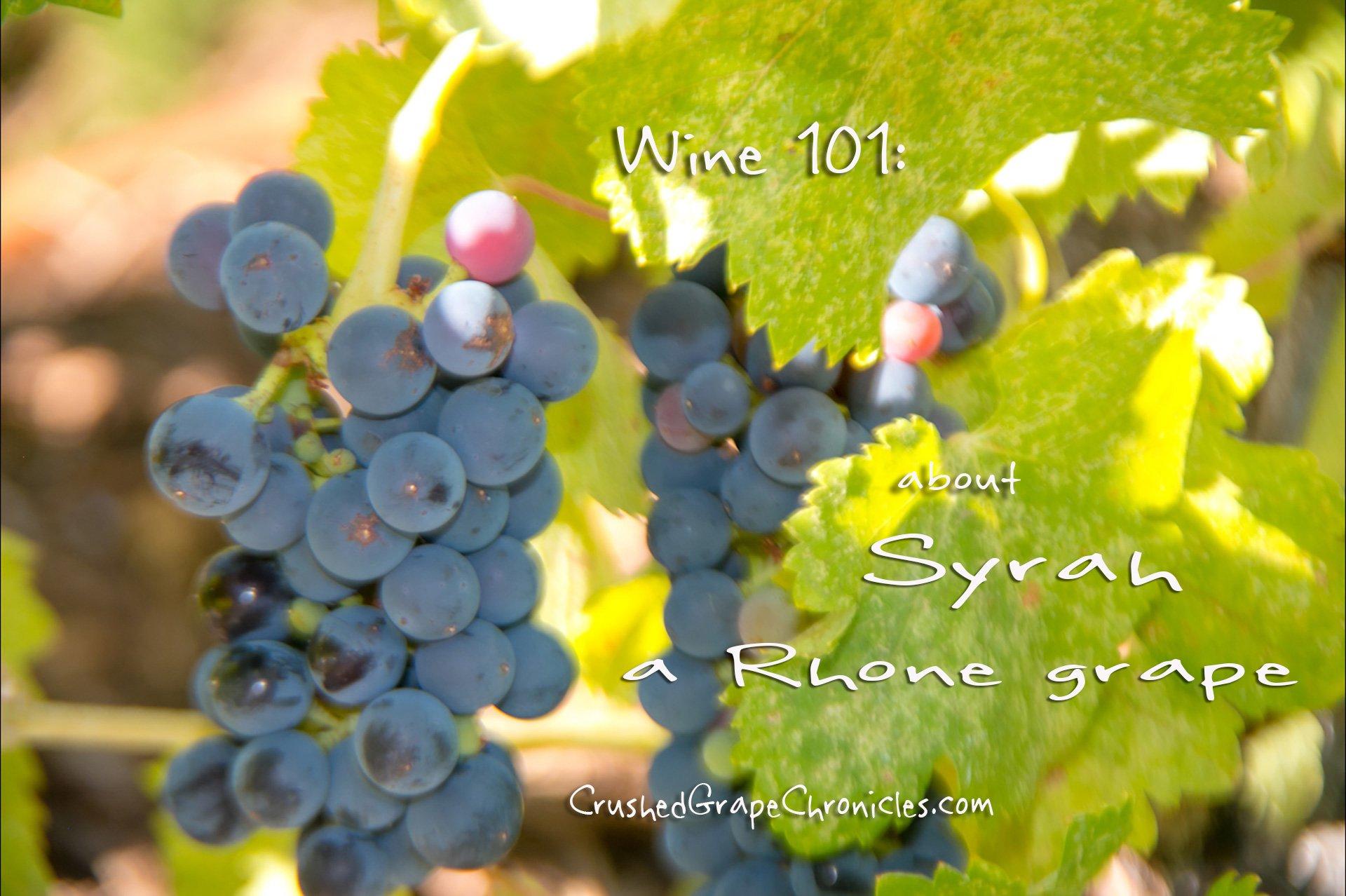 Wine 101: Syrah. a Rhone Grape