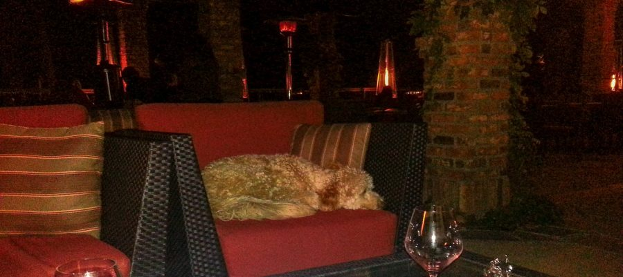 10 Dog Friendly tasting rooms in Santa Barbara