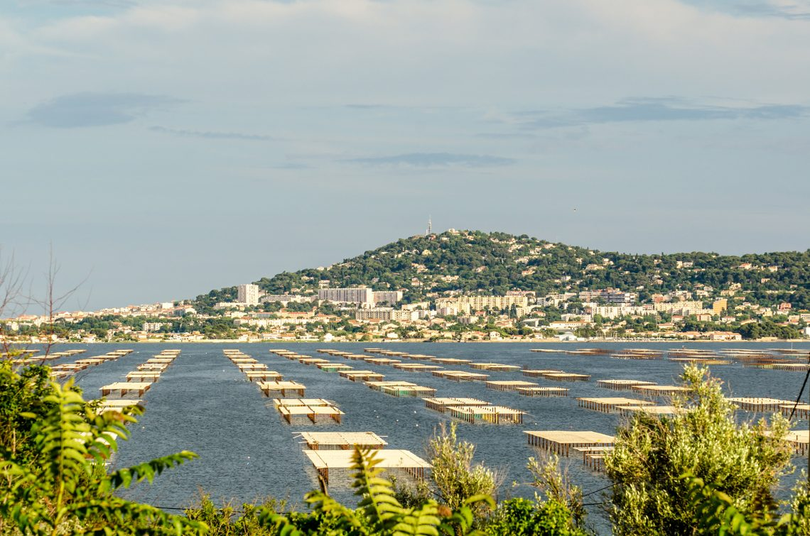 Photo of Oyster beds on the Thau Lagoon