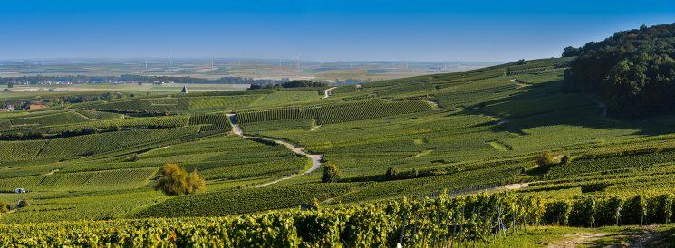 Champagne vineyard in Marne France