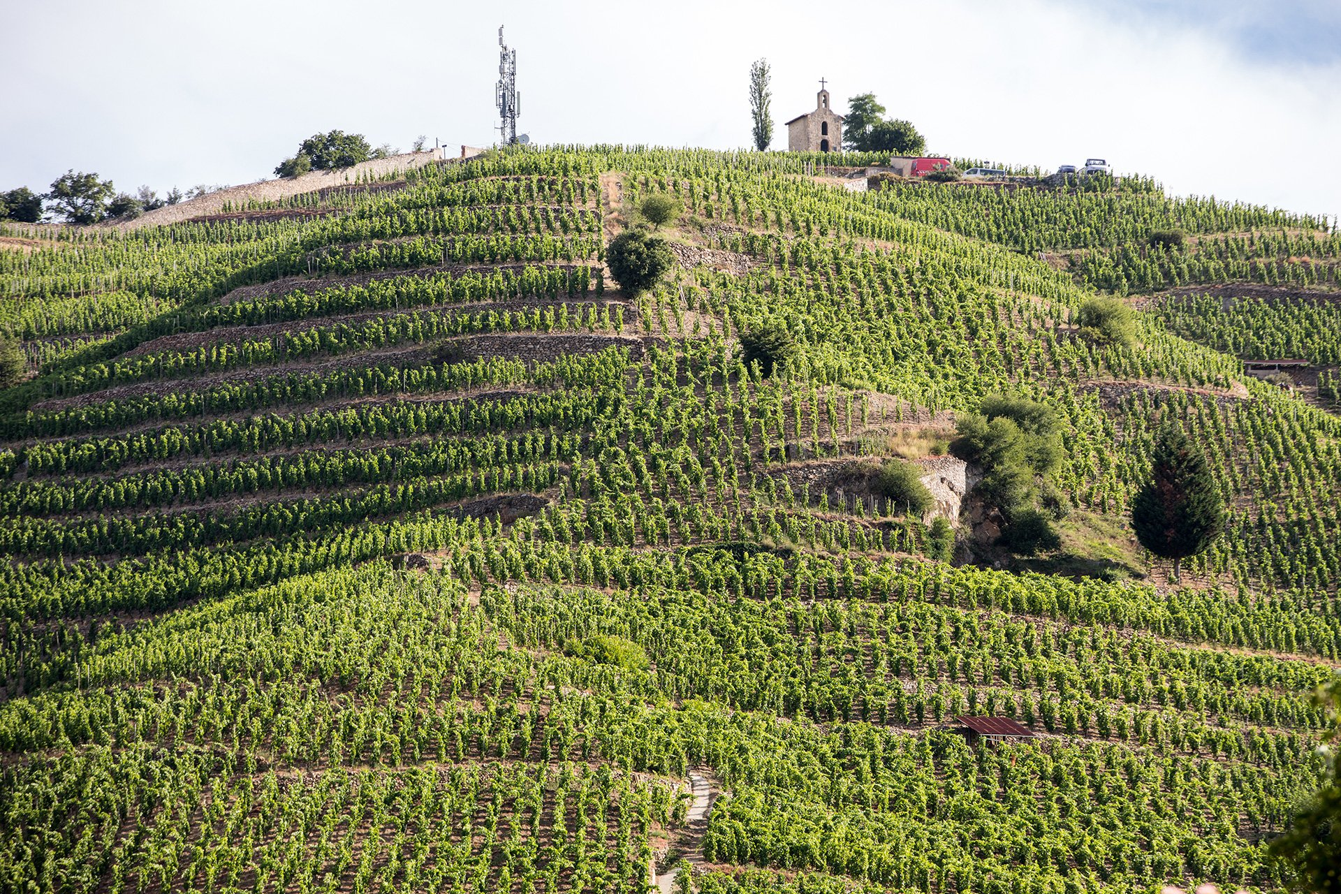M.Chapoutier Crozes Hermitage vineyards in Tainl' Hermitage Rhone valley France