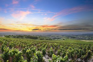 Panorama of vineyards at sunrise Beaujolais France