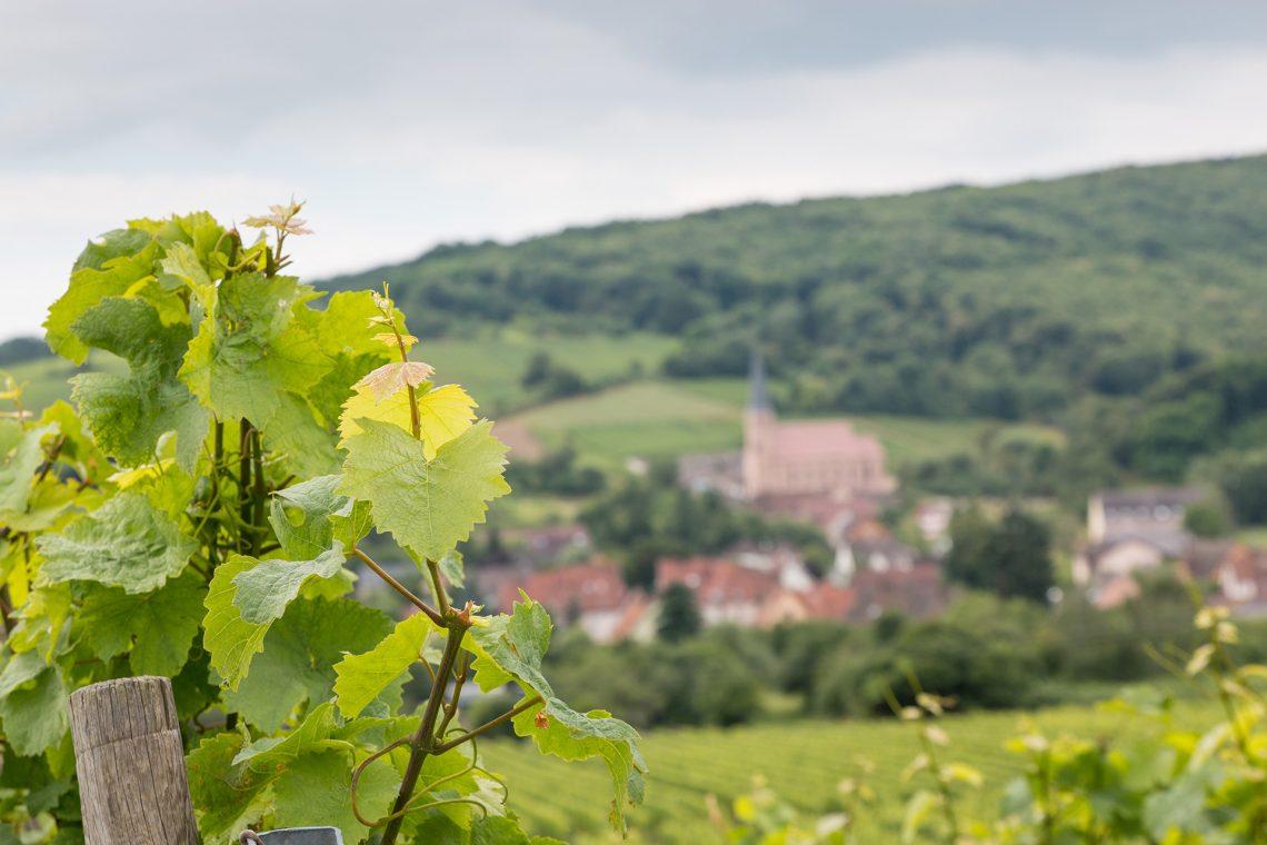 Route-des-vinsd'Alsace
