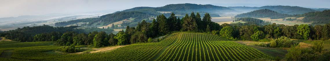 Willamette Valley Wine Country panorama