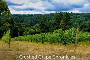 Chehalem Mountains AVA from Beckham Vineyards