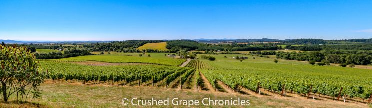 Illahe Vineyard in the proposed Mount Pisgah/Polk County AVA