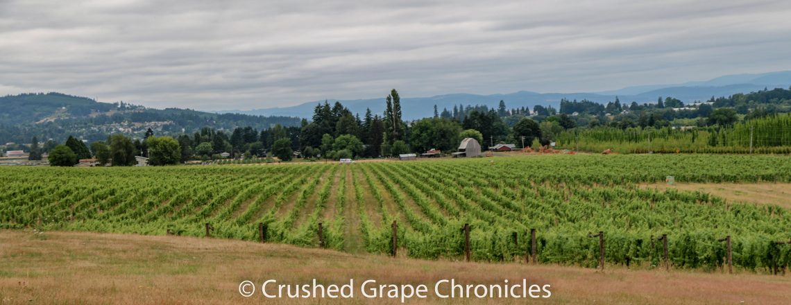 Montinore Vineyards in the proposed Tualatin Hills AVA